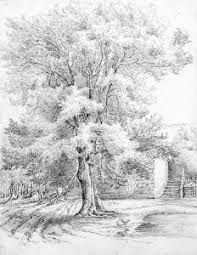 file lucy bacon sketch of an ash tree jpg wikimedia commons
