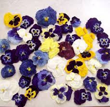 dry pansies dry flowers centerpiece flower favor