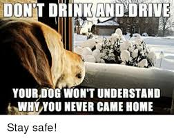 Drink Driving Memes - dont drink and drive your dog won t understand why you never came