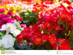 pretty flower garden ideas garden design garden design with beautiful flower garden stock