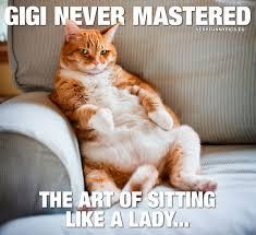 Cat Sitting Meme - nobody tells gigi how to sit very funny pics