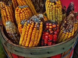 virginia first thanksgiving a corny thanksgiving english language blog