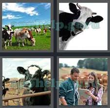 4 pics 1 word level 2201 to 2300 6 letters picture 2274 answer