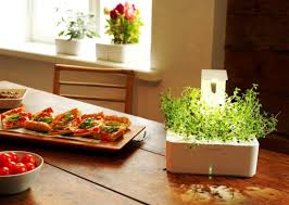 simple indoor herb garden kit ideas u2014 luxury homes