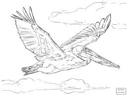 funny flying pelican birds coloring pages for kids