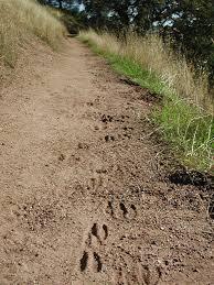 Henry Coe State Park Map richard rowland perkins com