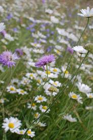 wild flowers in wild meadows 117 best wild flowers meadows images on pinterest wild