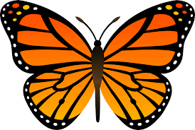 top 84 butterfly clipart free clipart spot