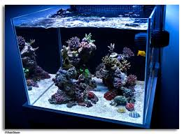 Saltwater Aquascaping Andre Silvestre Reef Tank Pinterest