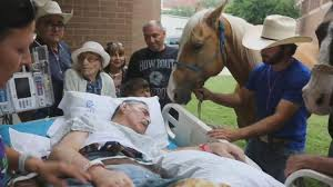 audie l murphy memorial va hospital dying veteran reunited with horses for one last ny