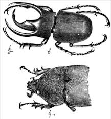 sexual dimorphism darwin and gender the blog