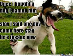 Stupid Animal Memes - stupid dog you make me look bad by sygensphere18 meme center