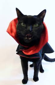 Cat Halloween Costumes Cats Cat Costume Dracula Vampire Cat Costume Cape Rockindogscoolcats