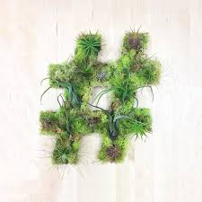 Home Plant Decor by Hashtag Plant Art Living Wall Planter Living Walls Plant Wall
