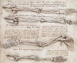 Leonardo Da Vinci Human Anatomy Drawings Leonardo Da Vinci The Mechanics Of Man Anatomy Pinterest