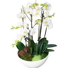 livraison de fleurs au bureau livraison de fleurs au bureau 28 images 25 novembre des fleurs