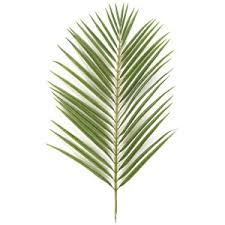 palm fronds for palm sunday everlasting palm trees branches for palm sunday