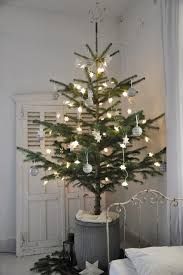 buy a live tree in a decorate it for the holidays as