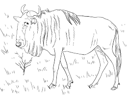 wildebeest coloring pages getcoloringpages com