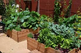 awesome great small backyard vegetable garden ideas vegetable