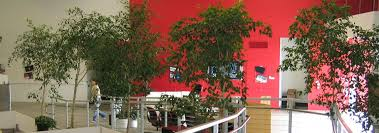 Interior Landscape Interior Landscape Los Angeles Indoor Plants For Office U0026 Home