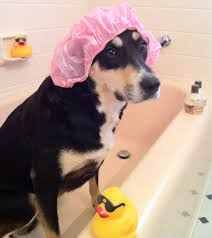 Dogs In The Bathtub 5 Times Choppy Cursed The Creator Of Dog Clothing U2013 Travels With