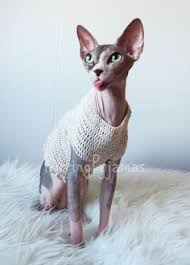 sphynx sweaters cat clothes sphynx clothes sphynx sweater cat sweater rainbow