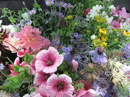 honey pot flowers u2013 the garden at waverley u2013 life in the