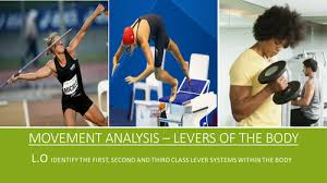 gcse pe aqa 9 1 movement analysis 1st 2nd and 3rd class lever