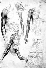 anatomy round two u2013 leonardo da vinci u2013 medium
