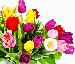 Spring Flower Bouquets - coloured tulips beautiful flowers u0026 landscapes pinterest