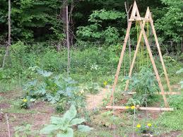 heargrassgrow com tomato trellis