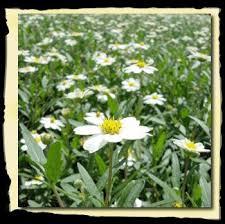 Fall Garden Plants Texas - 108 best se texas plants images on pinterest flower gardening