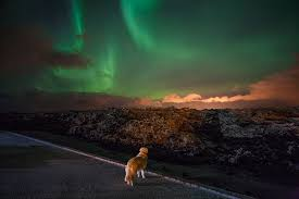iceland springs and northern lights www nli is northern light inn max s restaurant iceland