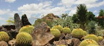 plants native to arizona edible desert plants official travel site for scottsdale arizona