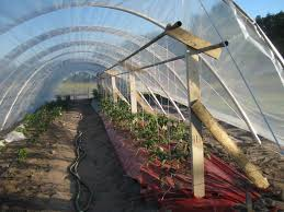 tomato trellis tom u0027s gardens