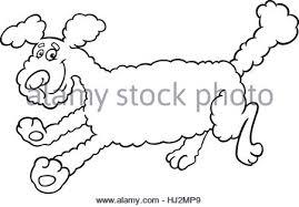 cartoon illustration happy fluffy dog pekingese coloring