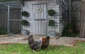 Best Backyard Chicken Coops by 10 Ideas For Building A Chicken Coop This Old House
