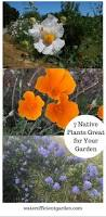 great basin native plants water efficient plant archives water efficient garden