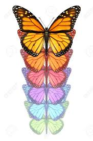 transformation butterfly stock photos u0026 pictures royalty free