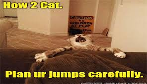 Cheezburger Meme Builder - i can has cheezburger cat memes page 3 funny animals online