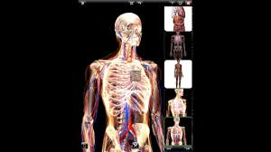 human anatomy atlas 3d images learn human anatomy image