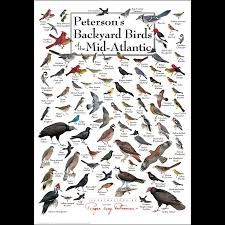 peterson u0027s backyard birds of the mid atlantic u2013 poster u2013 earth sky