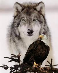 white eagle radio w siegfried wolf wall 12 30 13