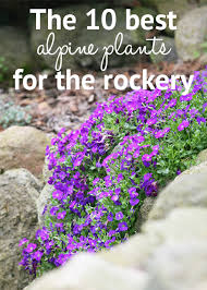 rockery plants top 10 plants for an alpine rock garden alpine