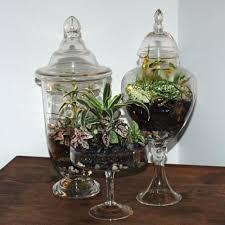 20 ide terrarium containers terbaik di pinterest