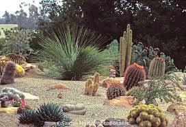 Cactus Garden Ideas Cactus Garden Planning Ideas 18 Excellent Cactus Garden Ideas