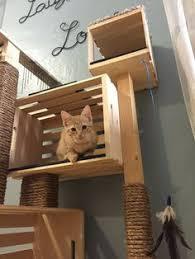 Modern Design Cat Furniture by How To Make A Cat Condo Condo Interior Design Hgtv And Cat Condo