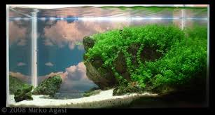 Aquascape Store How To Make Aquascape With Simple Design House Design And