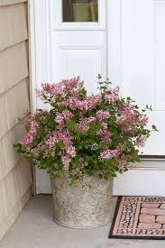 Fragrant Container Plants - 367 best container gardening inspiration images on pinterest